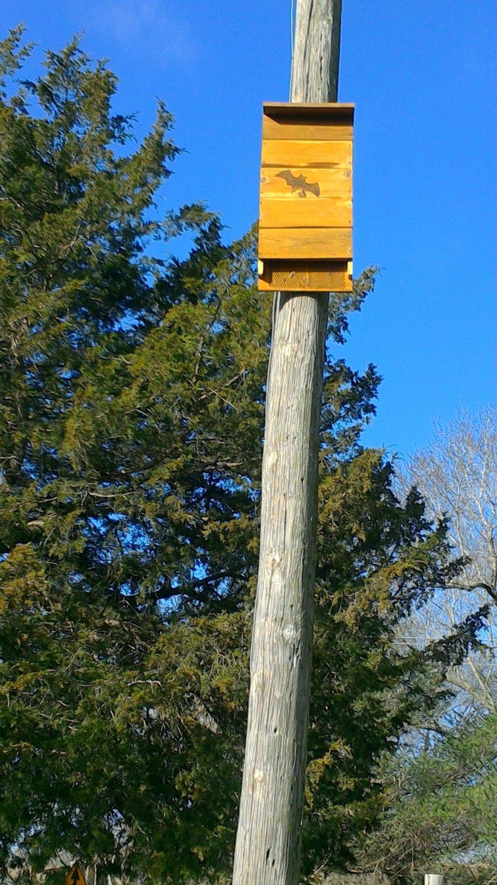 bat house on pole.jpg