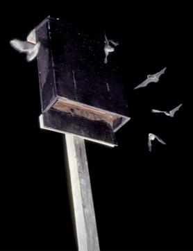 Night bat house.jpg