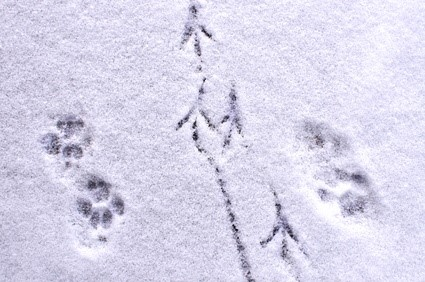 tracks in the snow brandi p.jpg