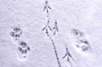tracks in the snow brandi p.jpg