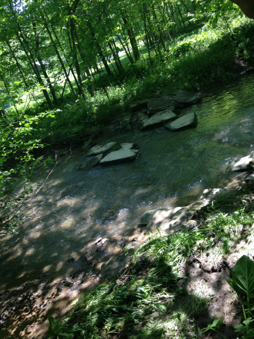 View from the top of the creek that we had to walk over.