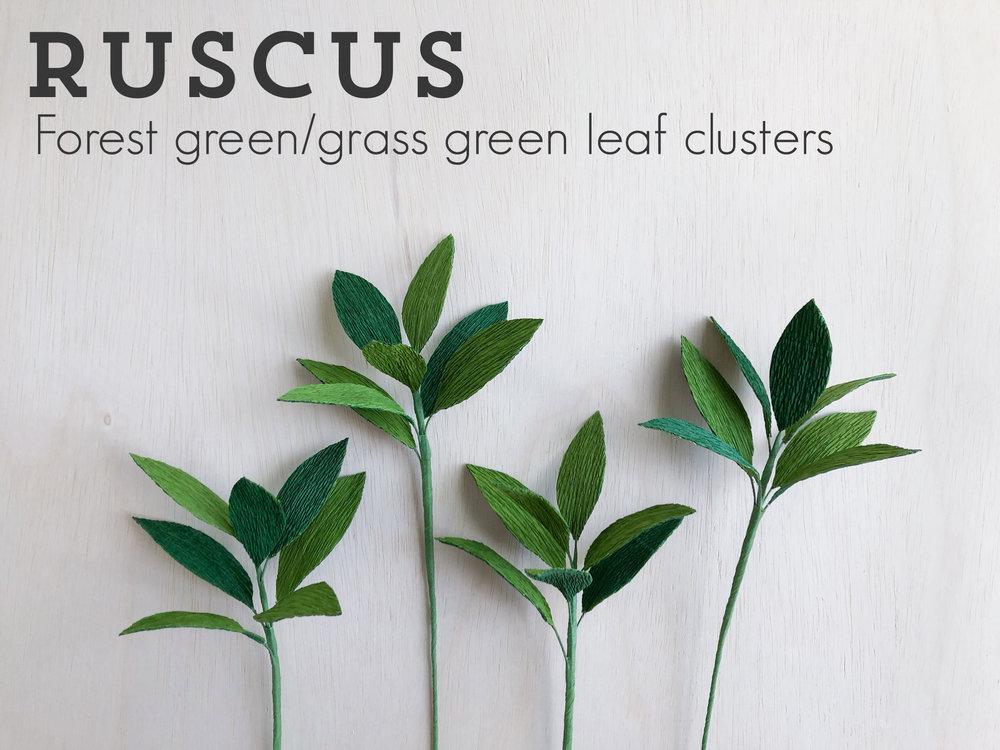 Ruscus.jpg