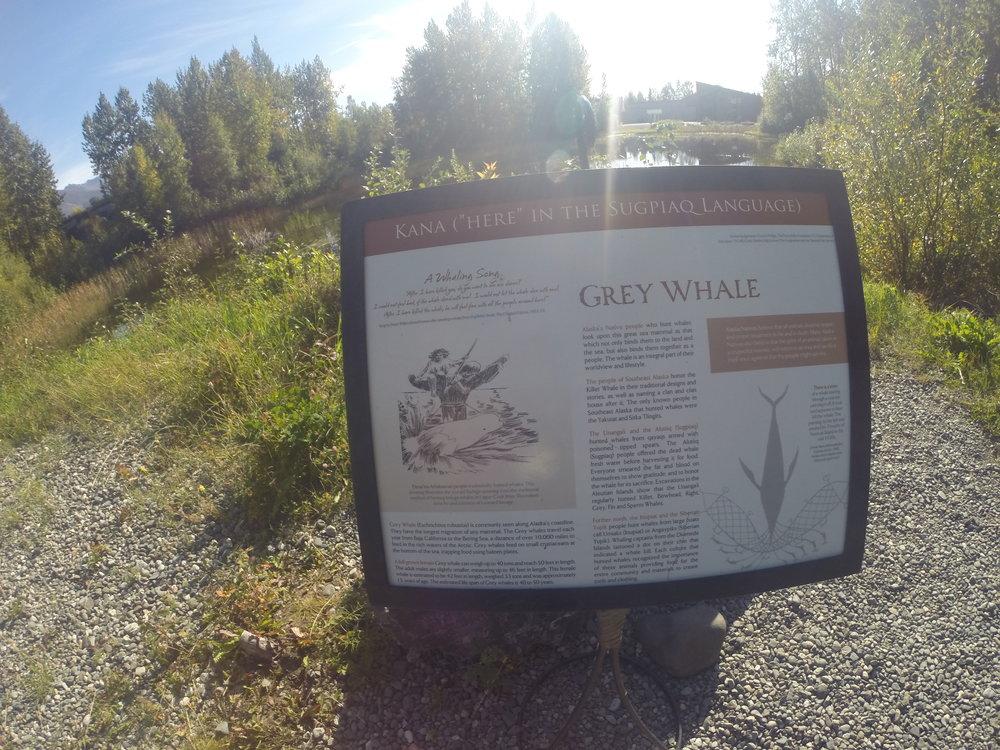 Grey Whale info