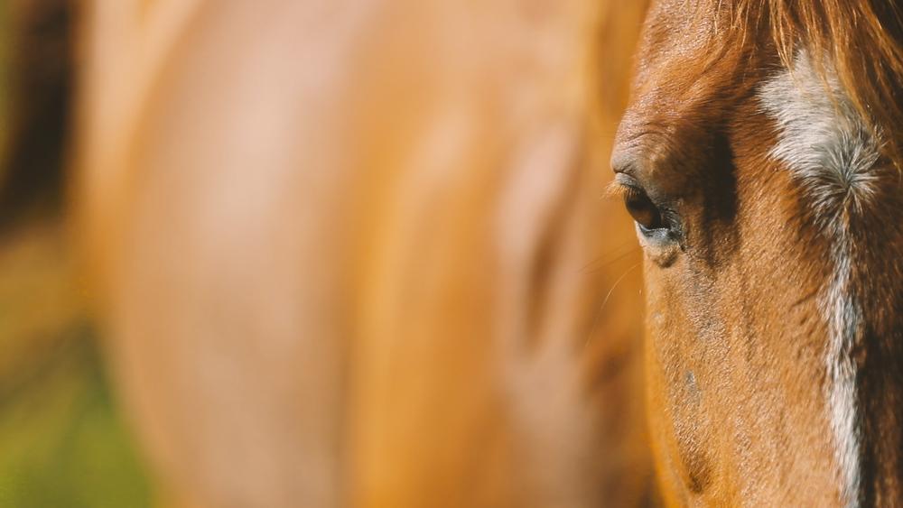 Horse - Bride Film