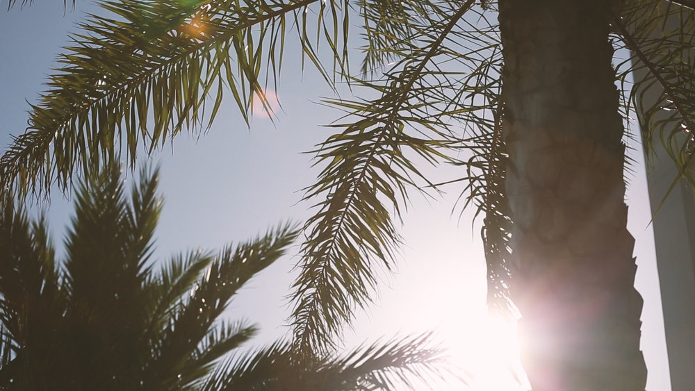 Palm Trees at Cuvee 30a - Bride Film