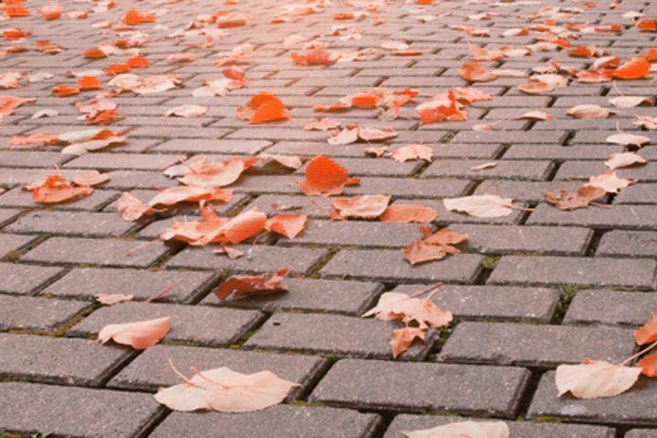 INSPIRATION: Fallen leaves on a pathway