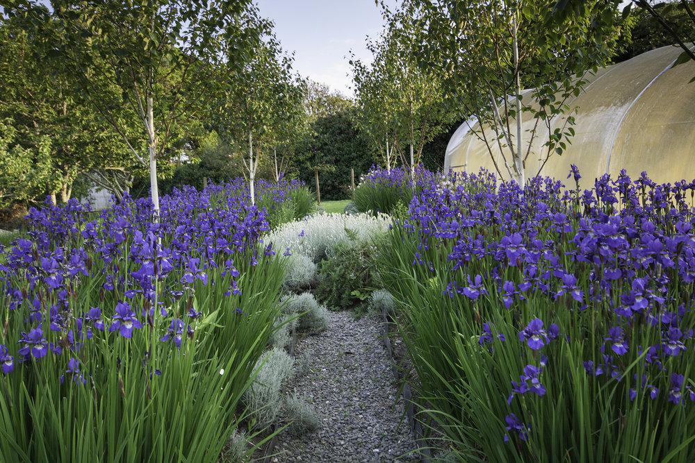 The old Iris Garden