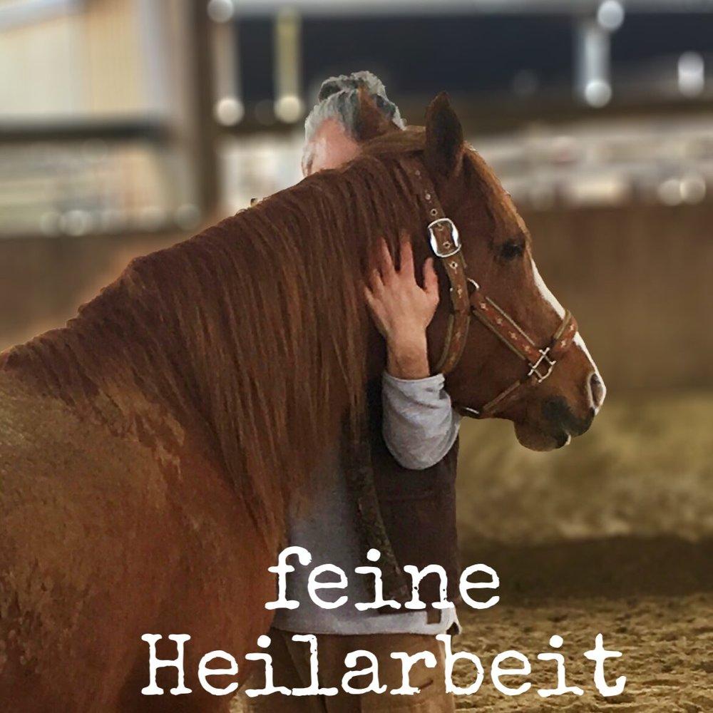 vertrauen aufbauen pferde.JPEG