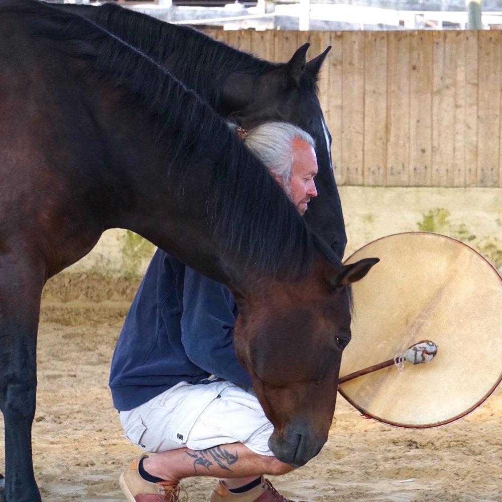 pferde enrico eulzer.jpg
