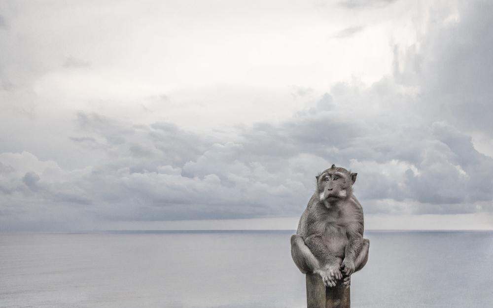Silver i Kamera & Bild Grand Prix.