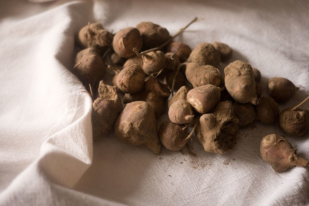 Jerusalem artichokes straight from the earth.