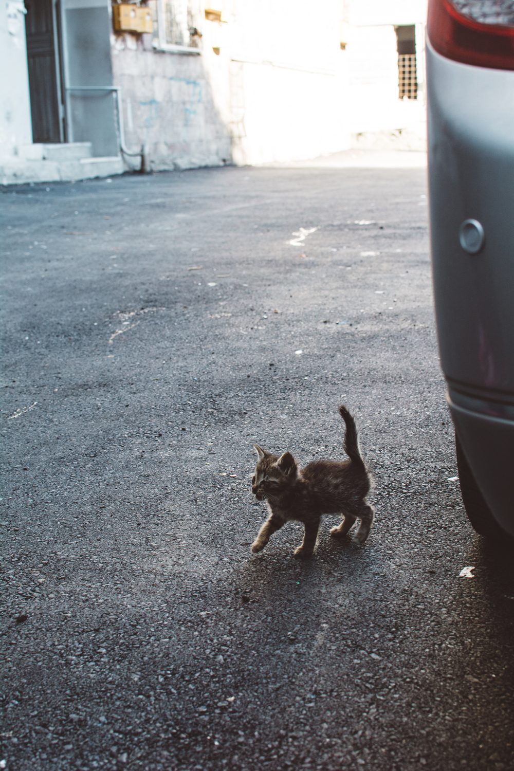 Kitten in the street | Gabriella Simonian ©