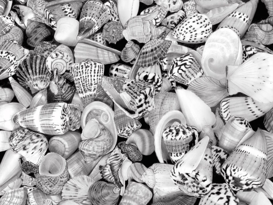 Shells Stiched copy.jpg
