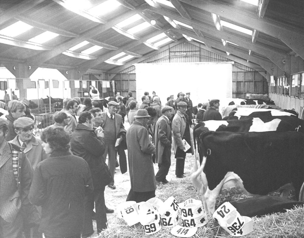 Cattle lines in 1970