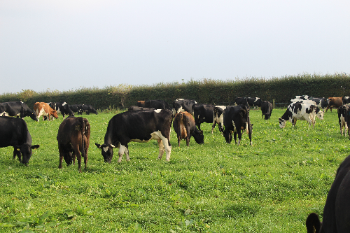 Cows grazed until mid-October and were turned out again on Feb 12th.png