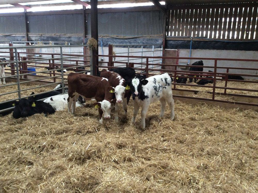 women in dairy meeting.jpg