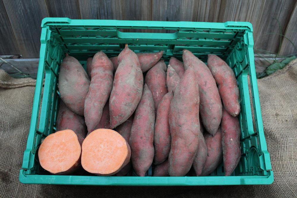Verkaufsbereite Süsskartoffeln der Sorte Orleans