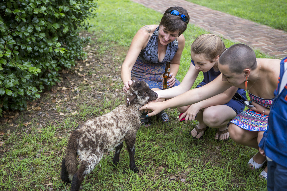 Our Hog Island Sheep delight guests of all ages.