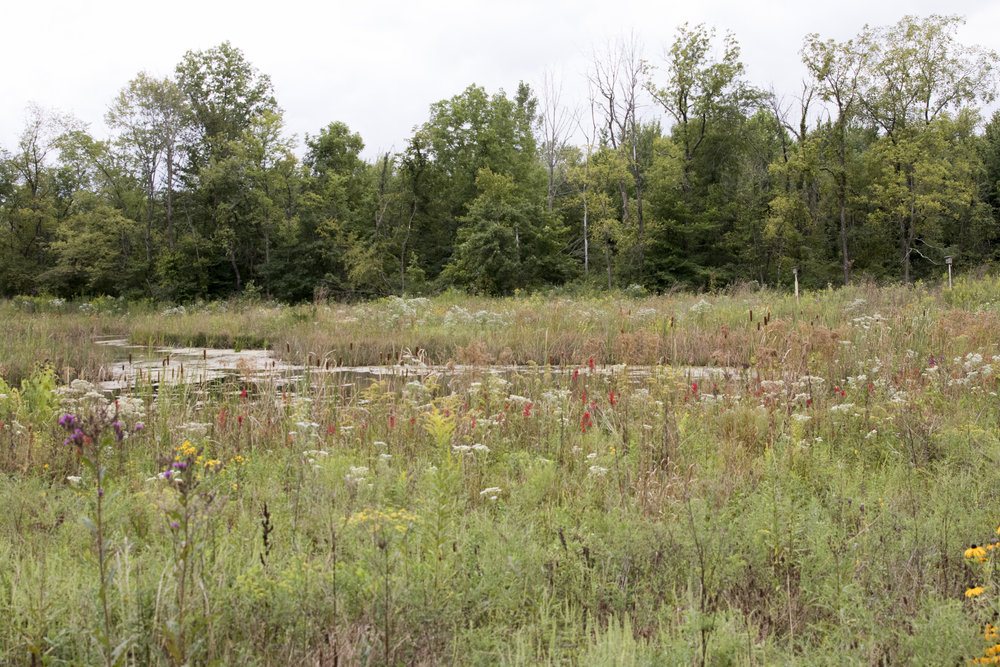 One view of the pond, grasses, and wild flowers.