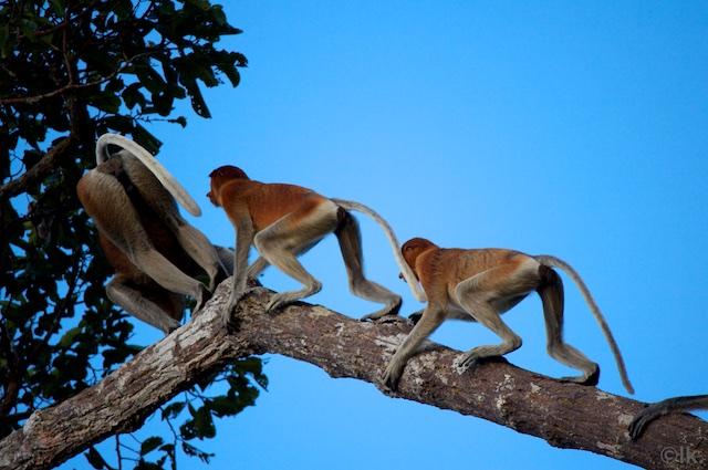 Borneo - lottakarin.com 268.jpg