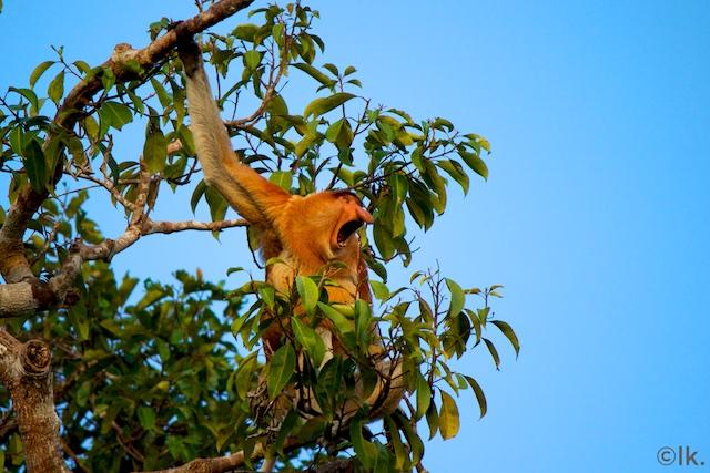 Borneo - lottakarin.com 267.jpg