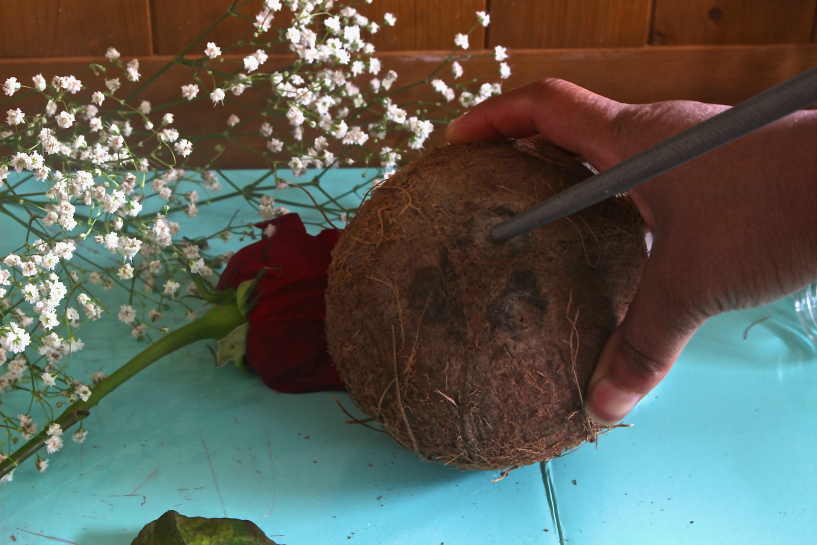 Coconut 2.jpg