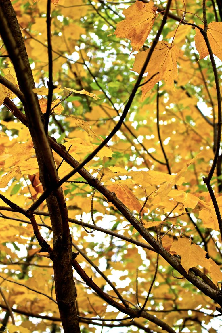 Leaves 6.jpg