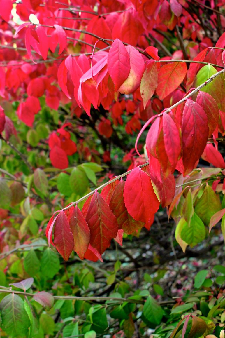 Leaves 8.jpg