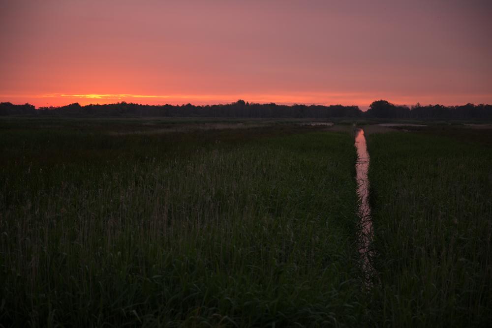 Decor voor Kleinst Waterhoen én Klein Waterhoen: de nieuwe natuur van Wetering Oost