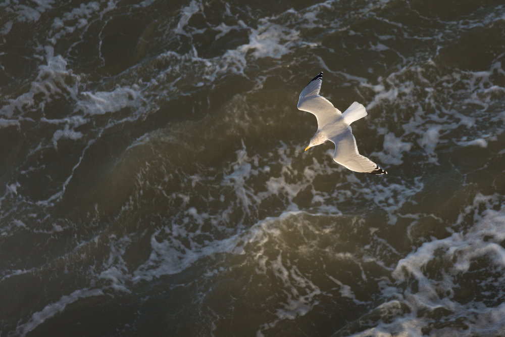 Scheveningen - Famous Dutch beachtown, well known for its beaches,and seabird migration site.
