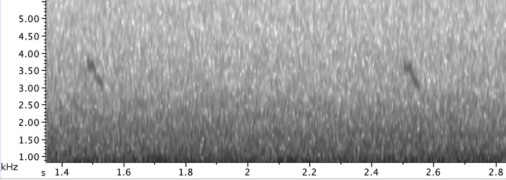 The characteristic sonogram of a  Parrot Crossbill  call that fits snug between 3 and 4 kHz.