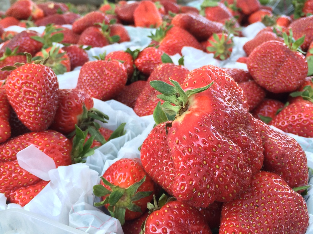 Trent Boyd Harvest Farms strawberries.JPG