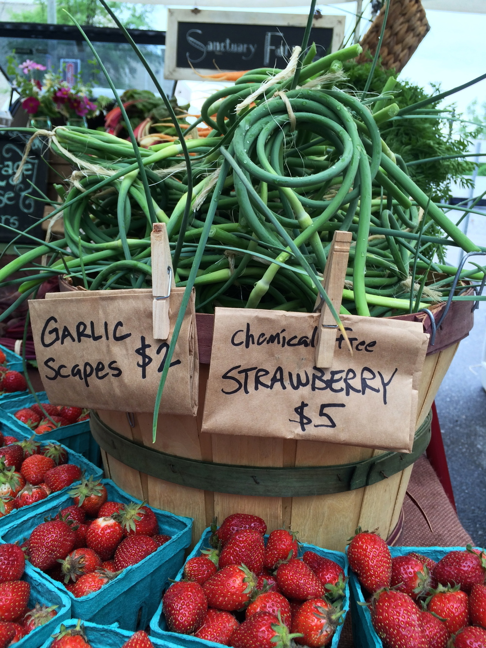 Sanctuary Farms garlic scapes and strawberries May 17.jpg