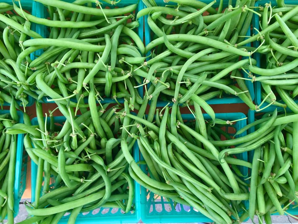 Sandlin Farms beans.jpg