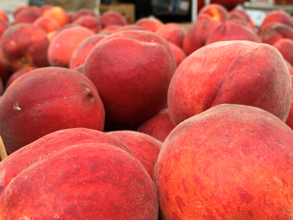 Knight Farm peaches close up.jpg