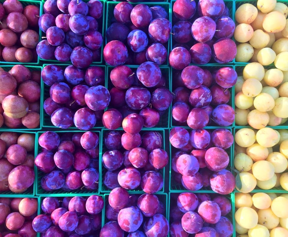 Knight Farms plums.jpg
