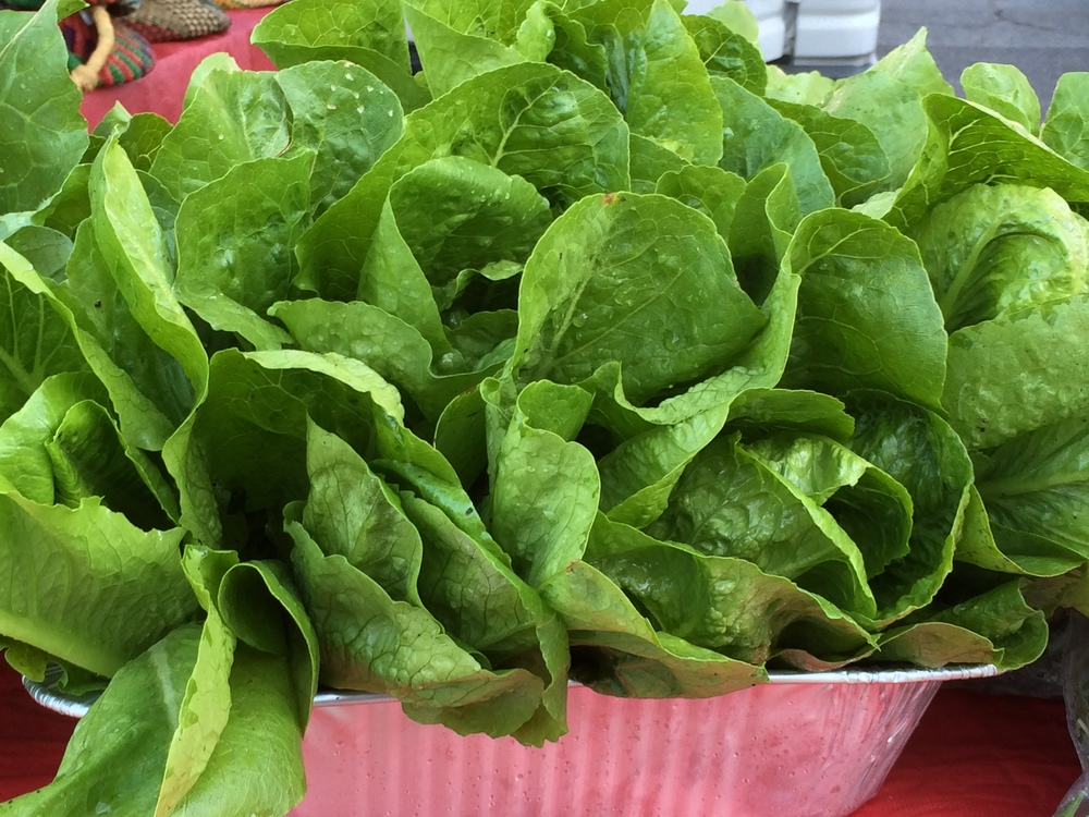 West End Community Gardens lettuce.JPG