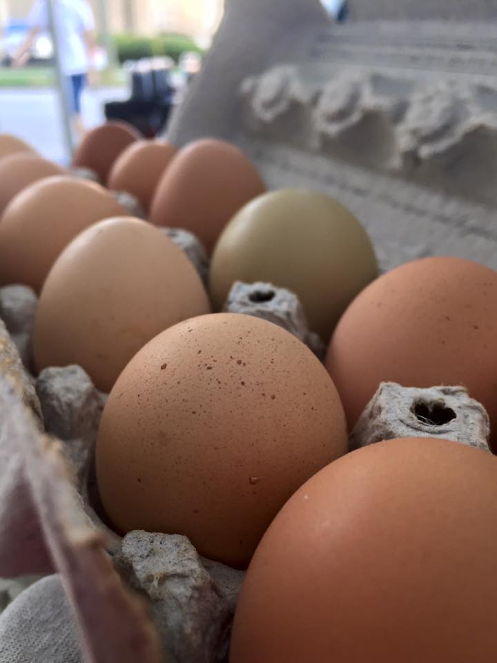 Sanctuary Farms eggs.jpg