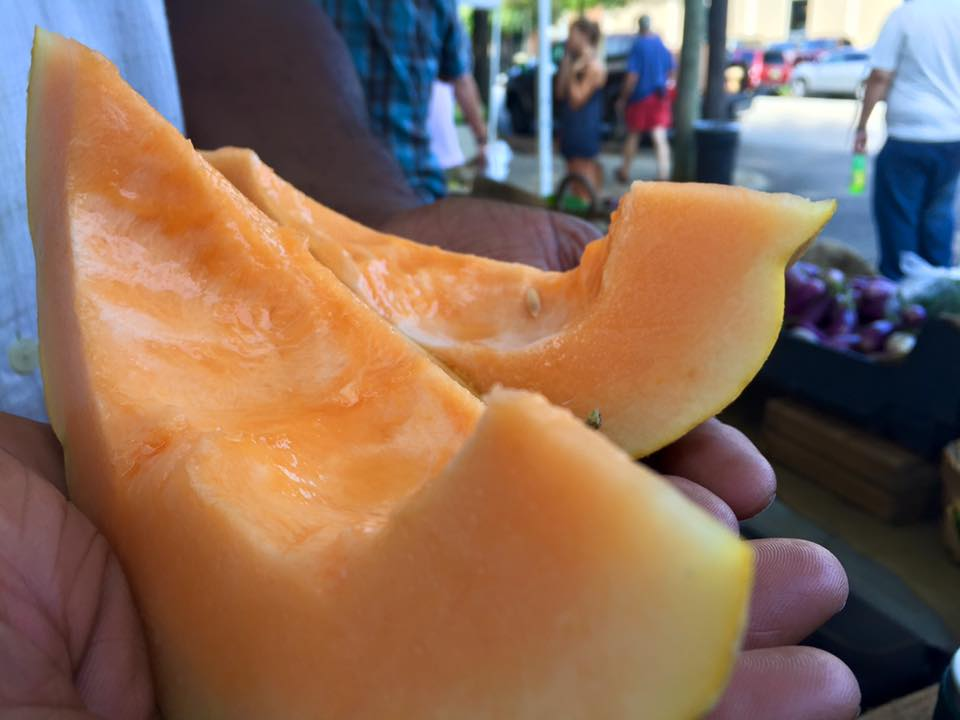 Sanctuary Farms cantaloupe.jpg