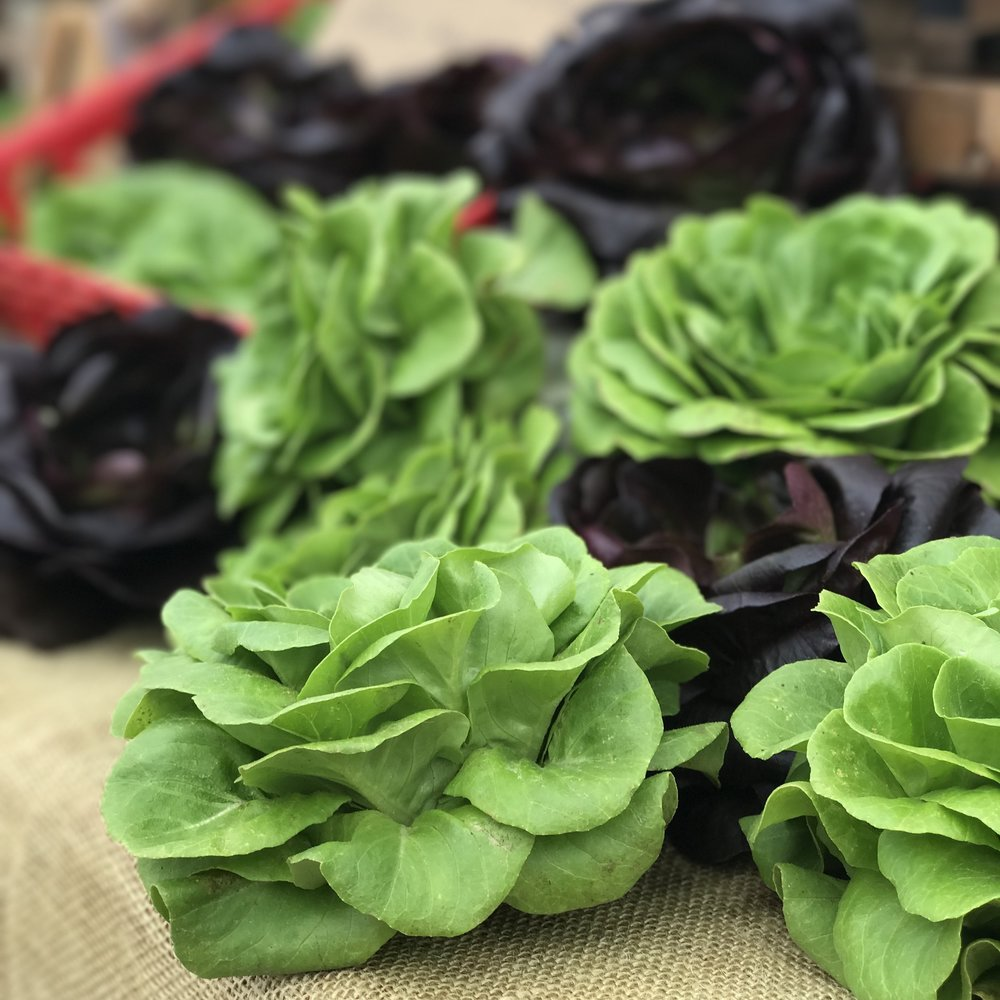 LETTUCE & SPINACH -