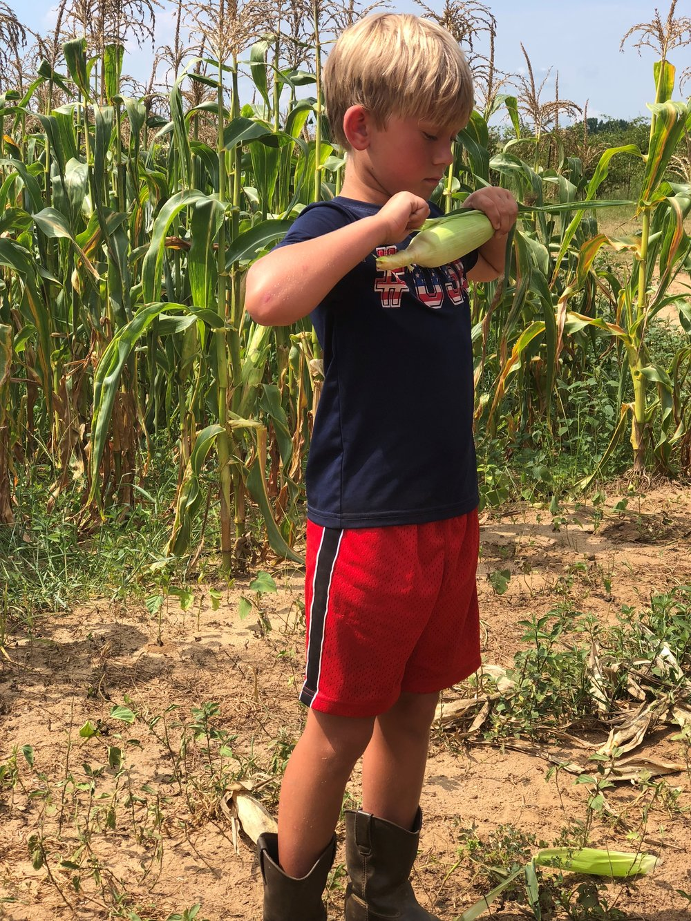 Aplin Farms shucking corn vertical.jpg