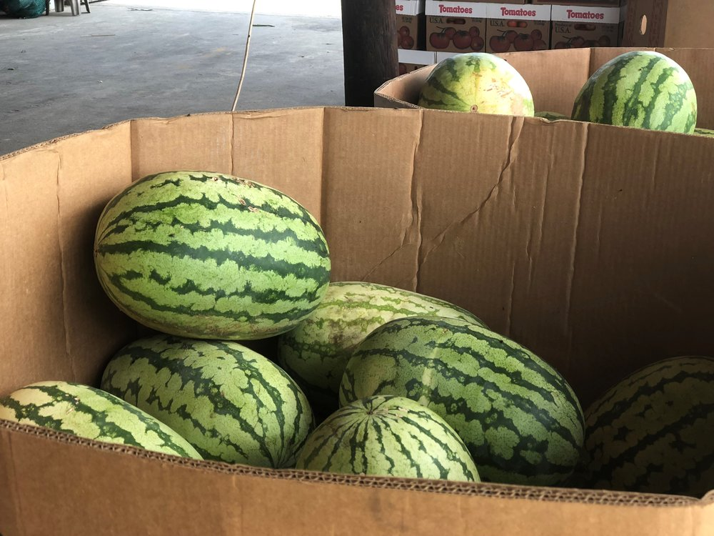 Aplin Farms watermelons horizontal best.jpg