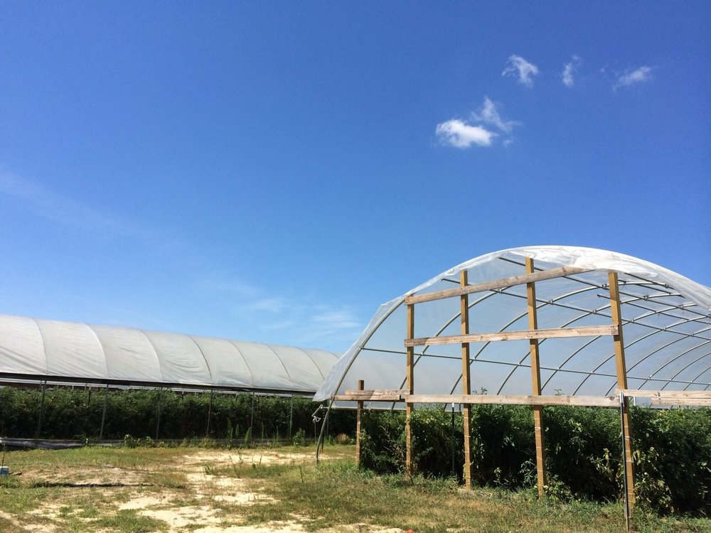 Penton Farms hoophouses.jpg