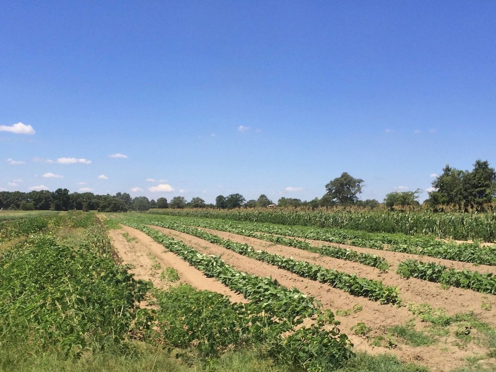 Penton Farms veggie field.jpg