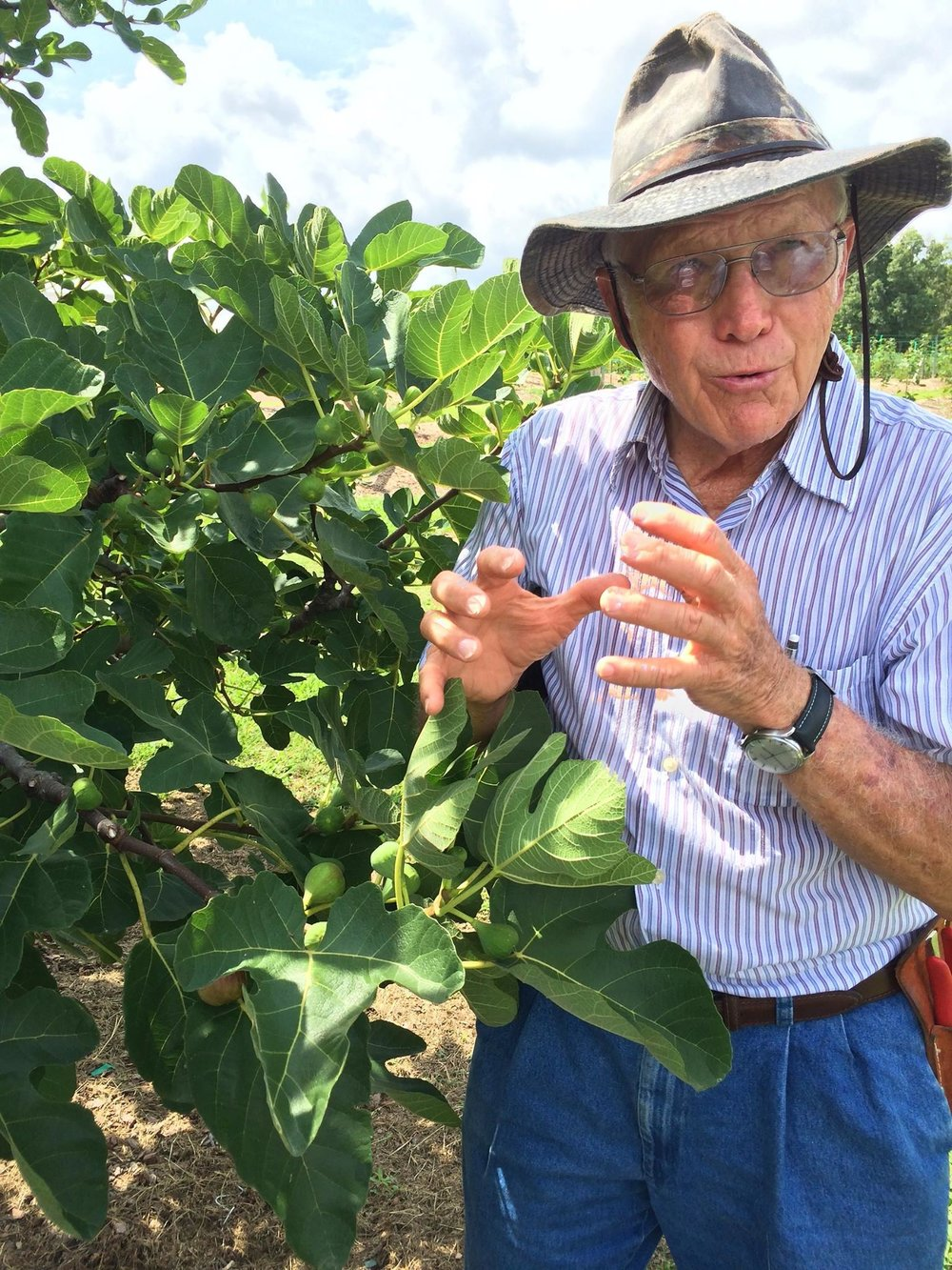 Petals From The Past Dr Powell talking figs.jpg