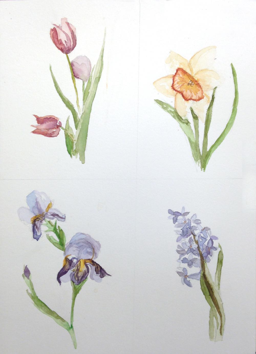 Tulip|Daffodil|Iris|Hyacinth