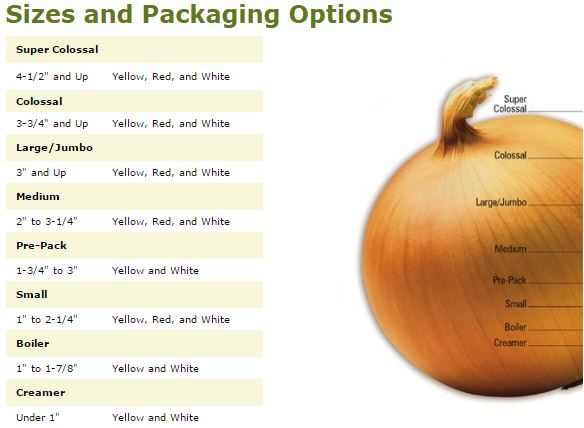 Photo Courtesy of National Onion Associations - www.onions-usa.org