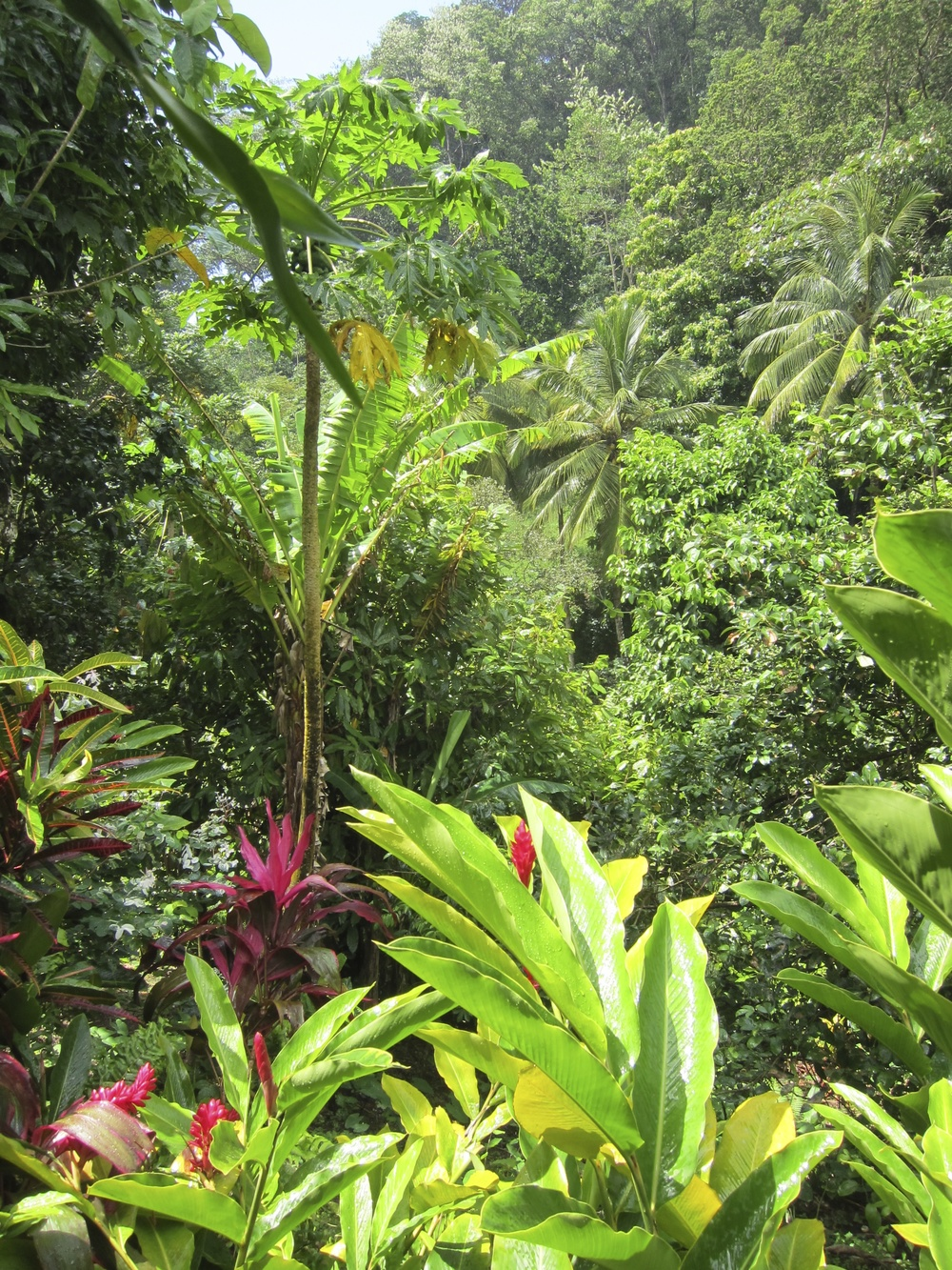 Dominica1.jpg
