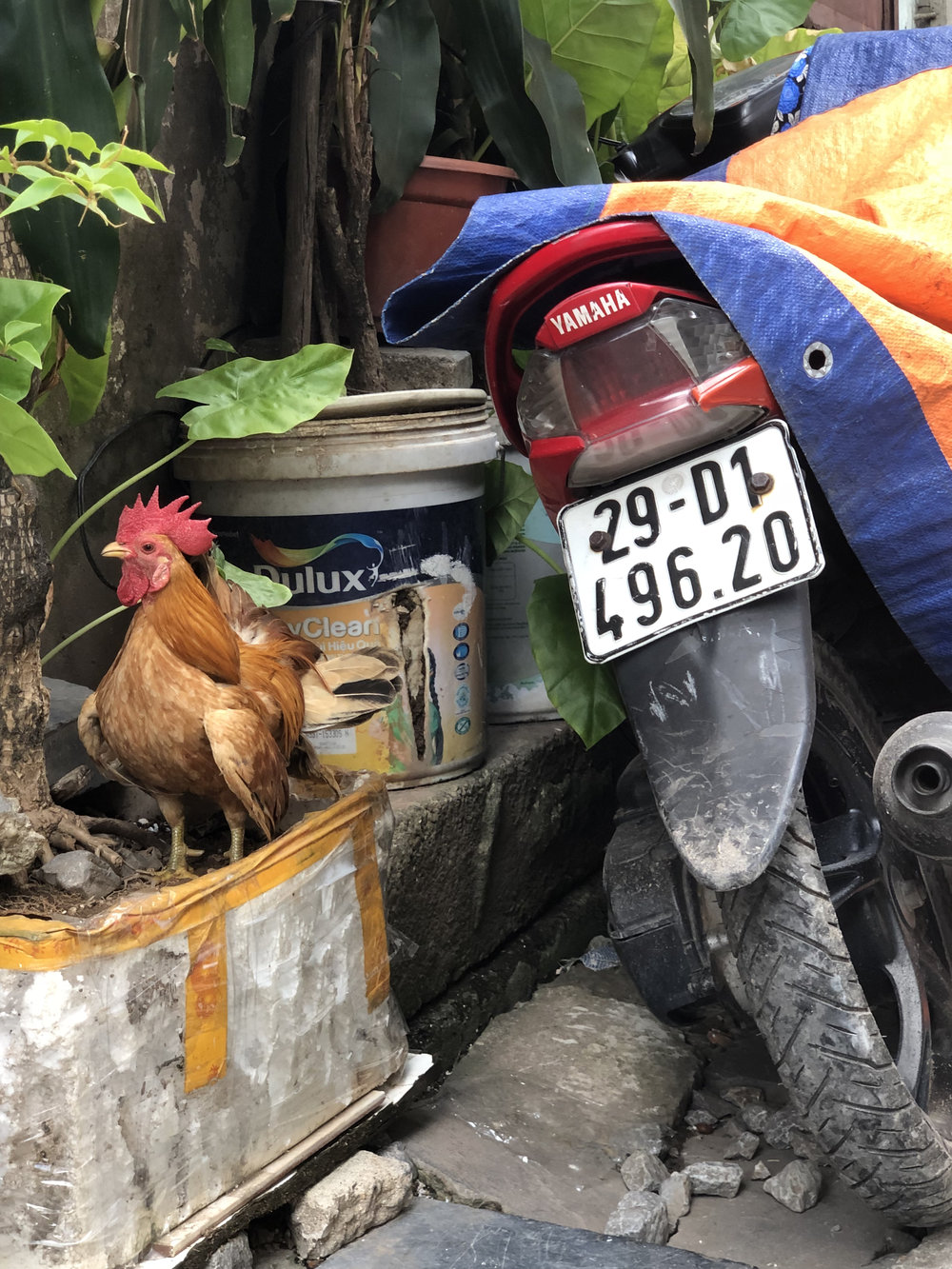 Hanoi  - 9.jpg
