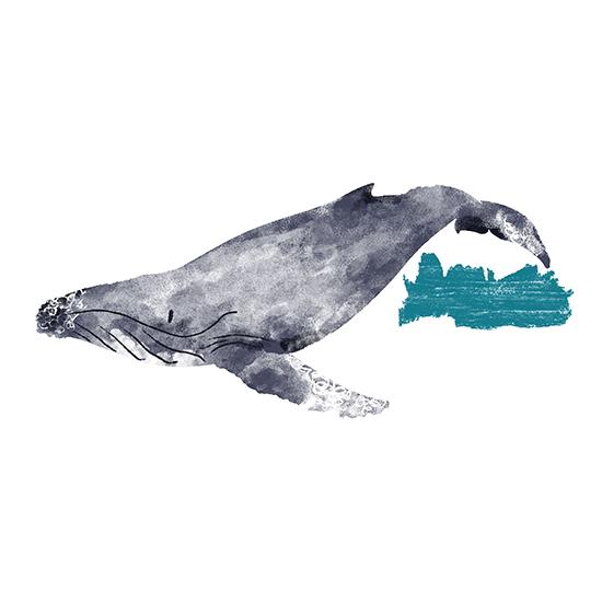 humpback.jpg